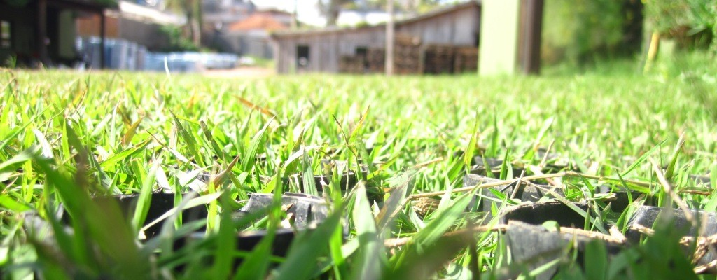 With Grass