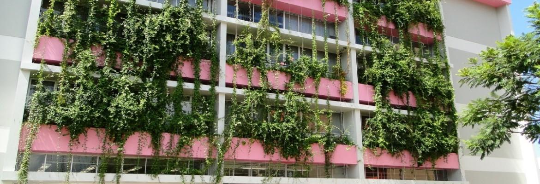 Fachadas de prédios ganham vida