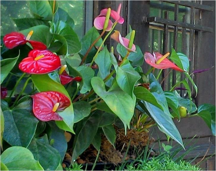 Plantas para jardim vertical ecotelhado - Plantas para pleno sol ...