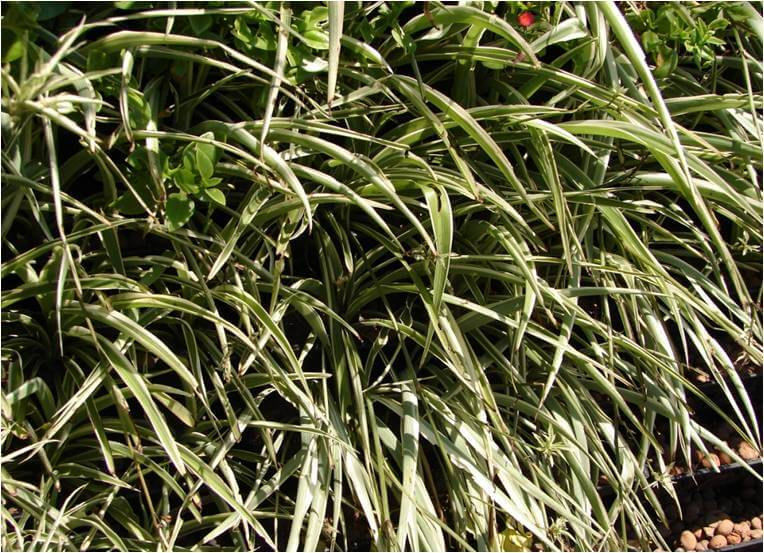 plantas jardim vertical sol plenoPlantas para Ecoparede