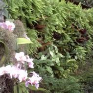 Jardim Vertical externo ou interno