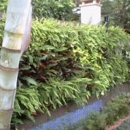 Jardim Vertical no pátio interno