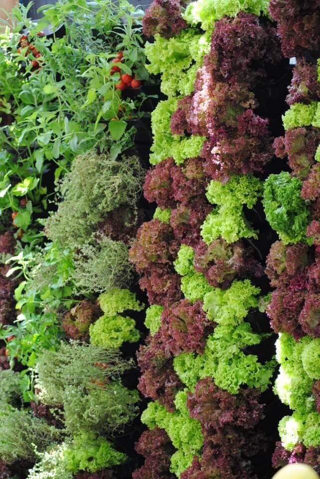 Jardim Vertical Canguru Ecotelhado Telhados Verdes ...