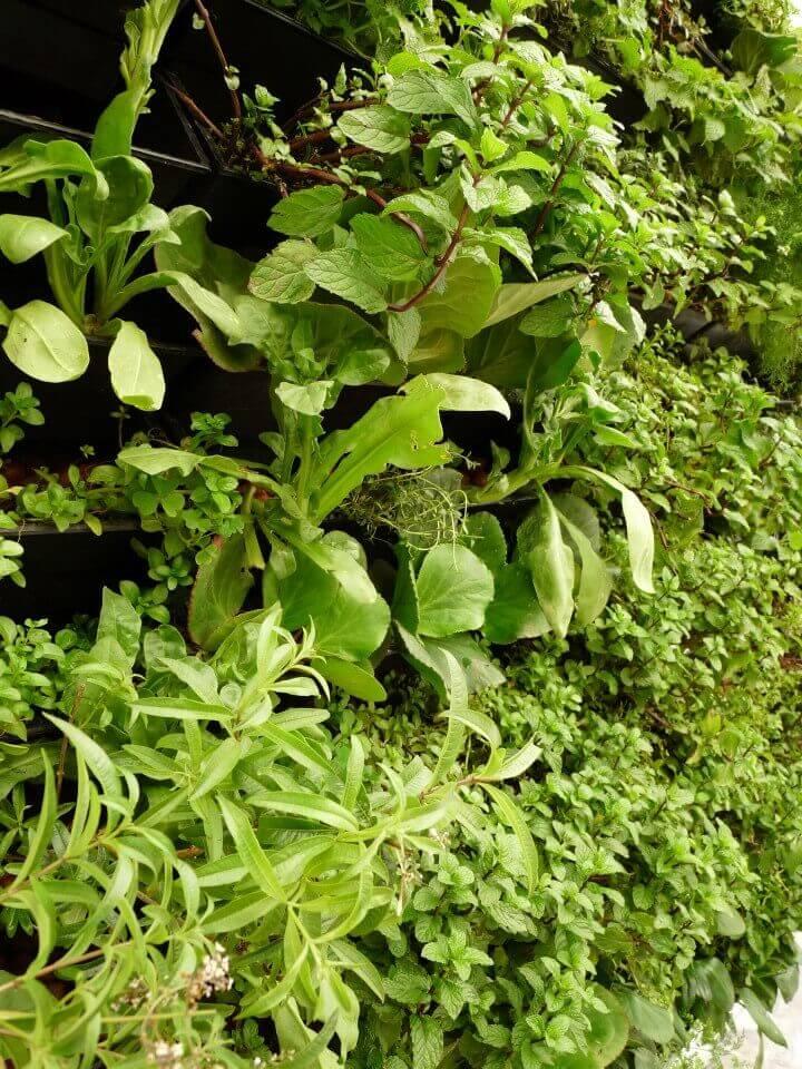 jardim vertical externo:Jardim Vertical Canguru