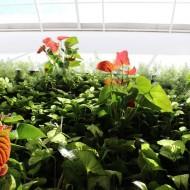 Jardim Vertical em ambiente interno