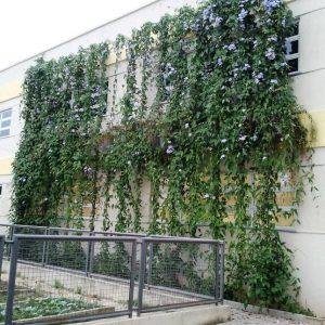 Arquitetura-Sustentabiliadade-4557a0a7fd79da.jpg