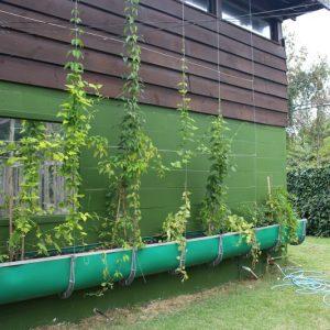 jardim-na-parede.jpg