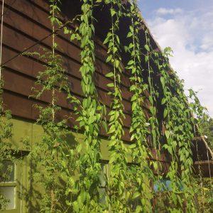 jardim-vertical-como-fazer.jpg