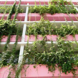 plantas-jardim-vertical-sol-pleno.jpg
