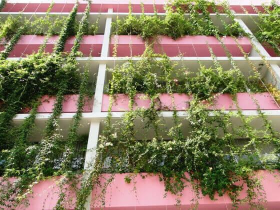 Jardim vertical ecotelhado - Plantas pleno sol ...