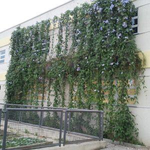 plantas-para-jardim-resistentes-ao-sol.jpg