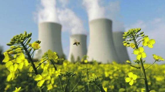 abelhas + industrias