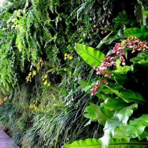 como-fazer-jardim-vertical-apartamento57448ff8cae27.jpg