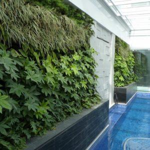como-fazer-um-jardim-na-parede57449004a2480.JPG