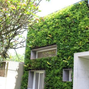 jardim-de-parede-como-fazer5744900a41527.jpg