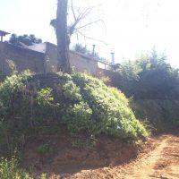 muroflex vegetado
