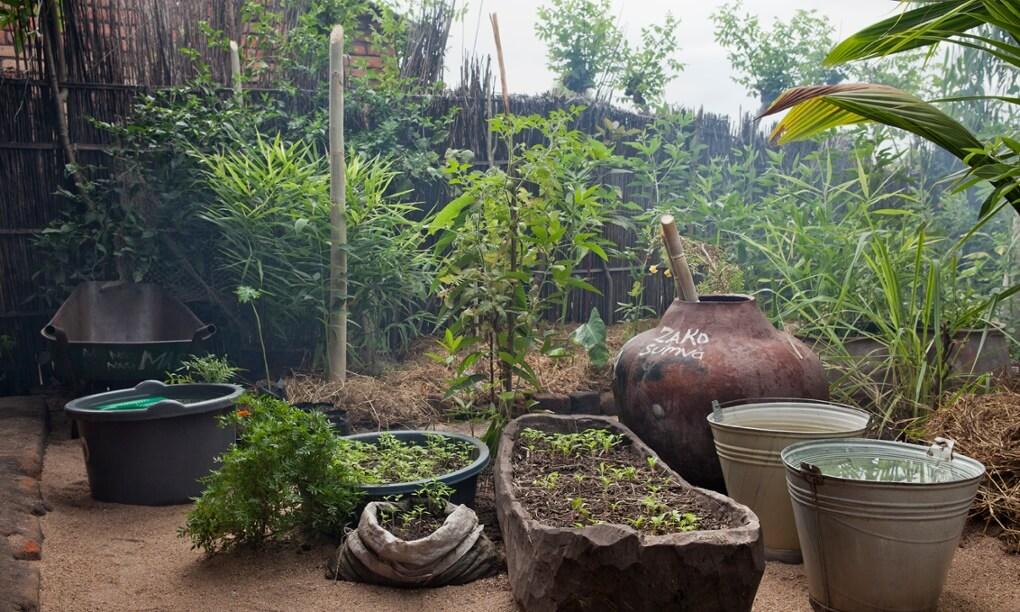 1-moringa-africano-e-jardins-de-permacultura-casa-de-permacultura-projeto-fotografia-iga-gozdowska-ll-moringa-africano-e-projeto-permacultura