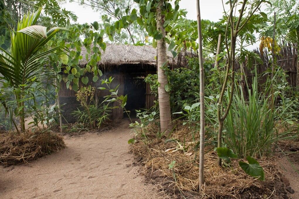 3-moringa-africano-e-jardins-de-permacultura-casa-de-permacultura-do-projeto-fotografia-iga-gozdowska-ll-moringa-africano-e-do-projeto-permacultura