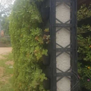 muro ecologico