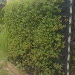 muro vegetado ecoparede