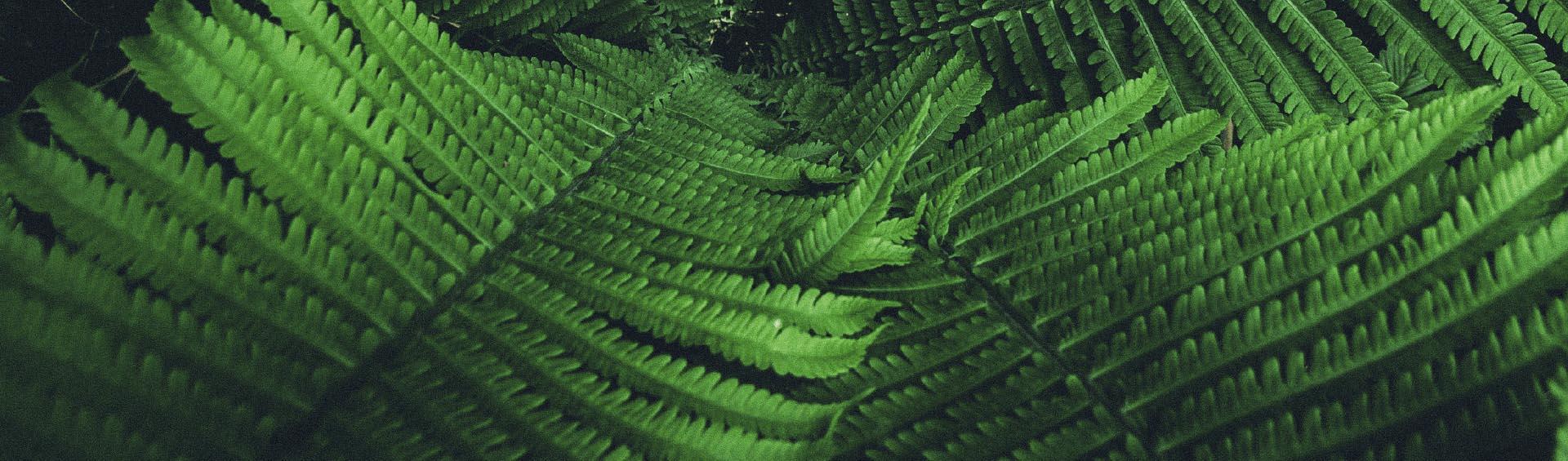 ecotelhado solucoes em bioconstrucao e arquitetura sustentavel