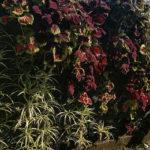 Muro Vegetado com Barreira Acústica Natural 4