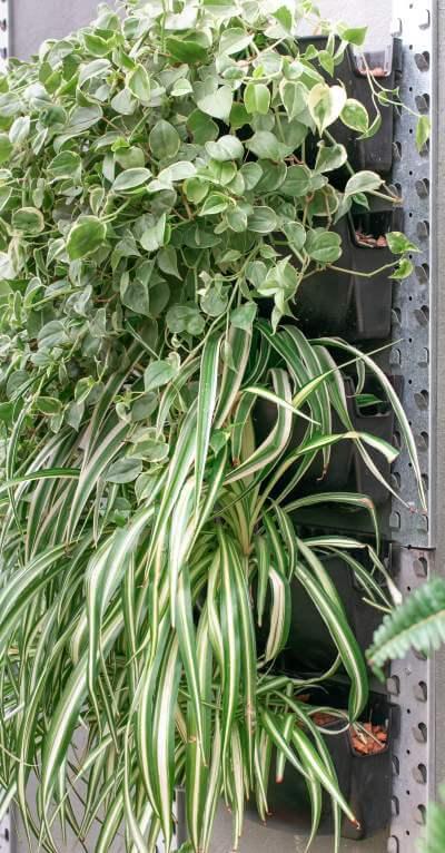 jardim vertical e paredes verdes categoria floreira mamute automatizada ab