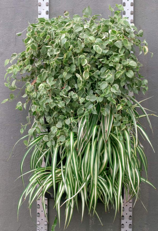 jardim vertical e paredes verdes categoria floreira mamute automatizada abc