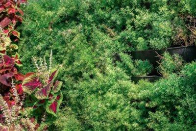 jardim vertical e paredes verdes categoria floreira mamute automatizada4