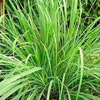 Plantas Para Jardim Vertical Parede Verde Ecotelhado