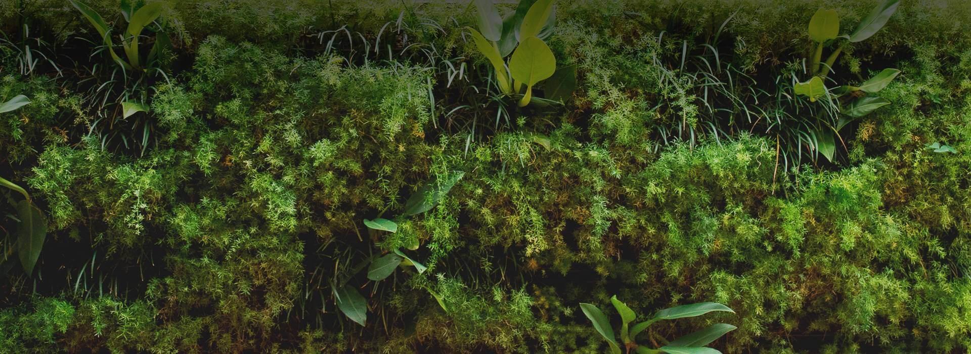 Sistemas para Arquitetura Sustentável e Bioconstrução