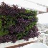 jardim-vertical-SP-ecotelhado