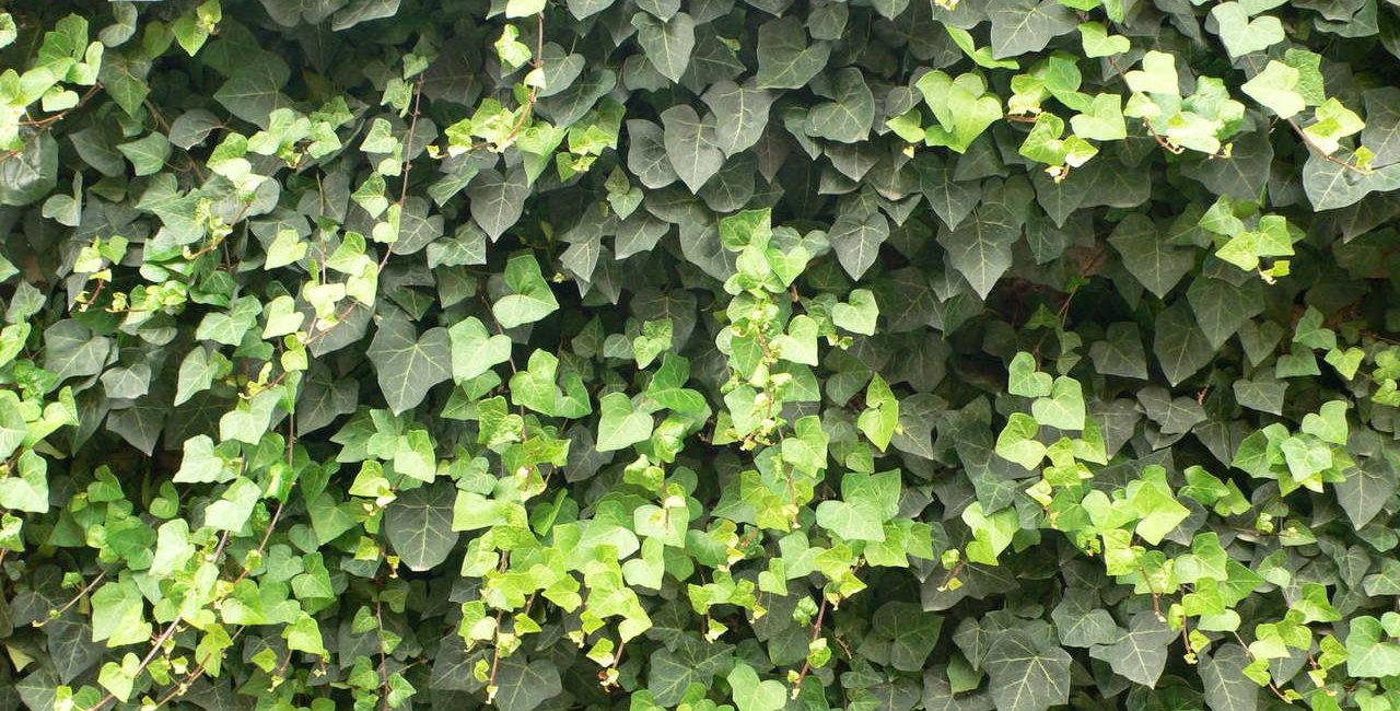 muro-com-jardim