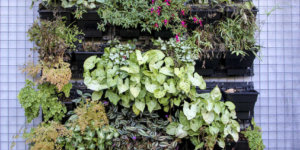 plantas-para-jardim-vertical-meia-sombra