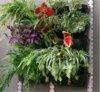 floreira jardim vertical de 1m2 (7)