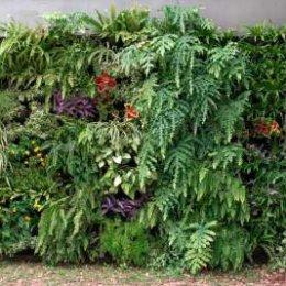jardim vertical parede verde floreiras de parede mamute