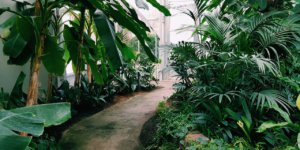 arquitetura-verde