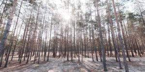 o-que-e-reflorestamento