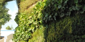 jardim-de-inverno-vertical