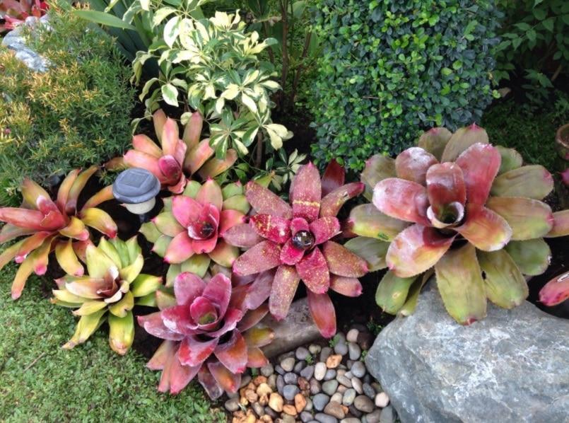 canteiro-plantas-para-jardim-de-inverno