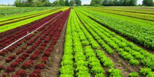 agricultura-urbana-1