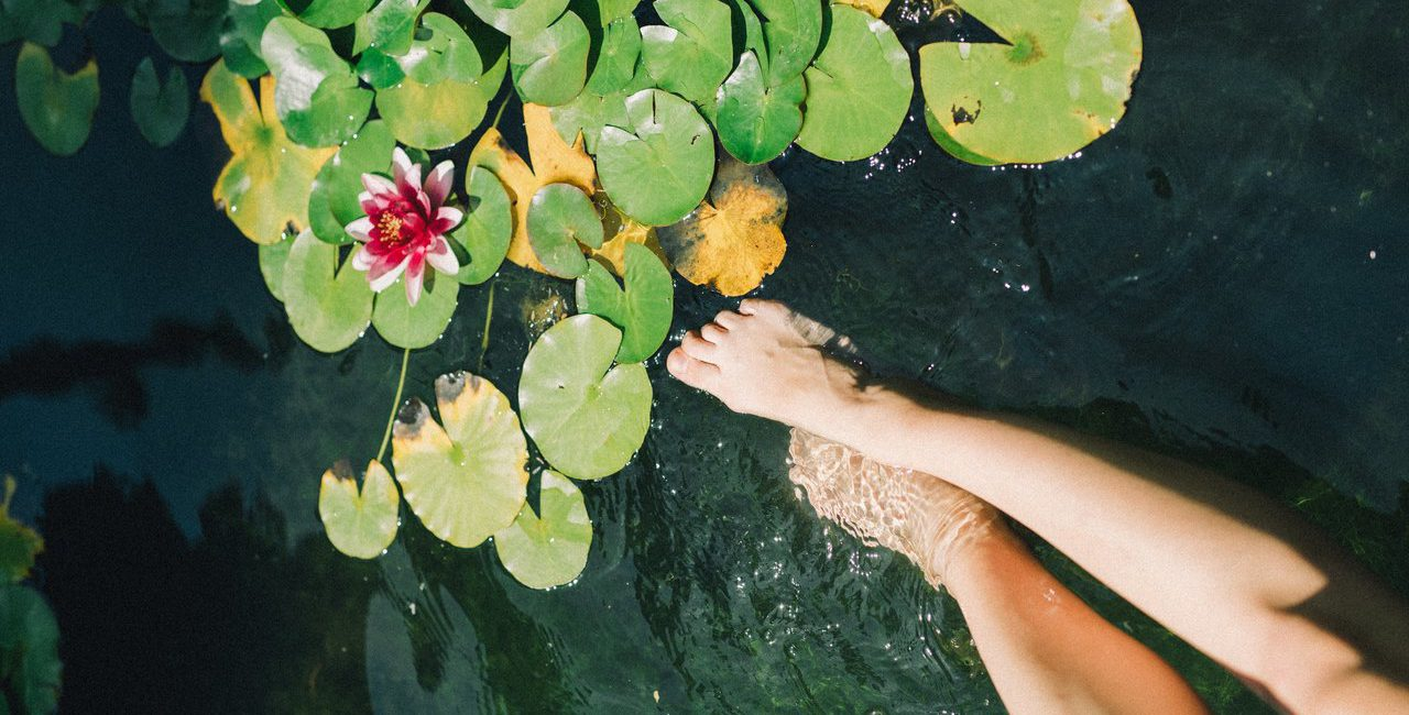 pés-água-plantas-piscina-natural-em-casa