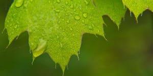 folha com gotas de chuva aguas cinzas