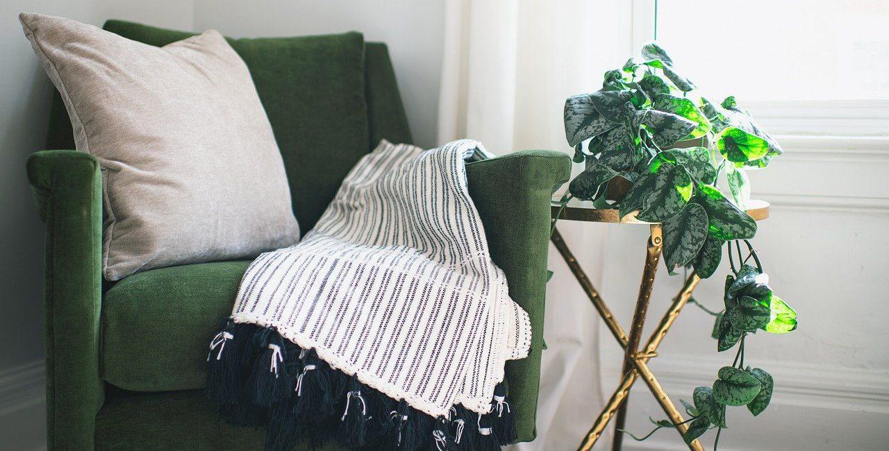 sofa e plantas solucoes para conforto termico