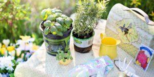 ferramentas para manter o jardim vertical preservado