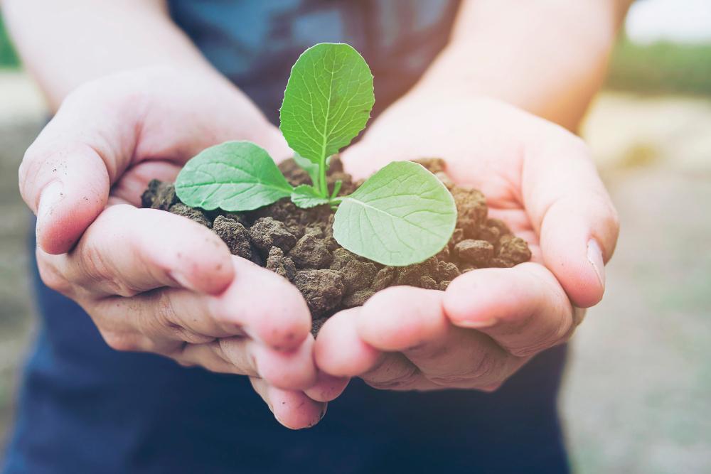 uma mão segurando uma plantinha, para ilustrar a certificação leed