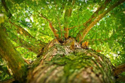 árvore ilustrando o que é permacultura