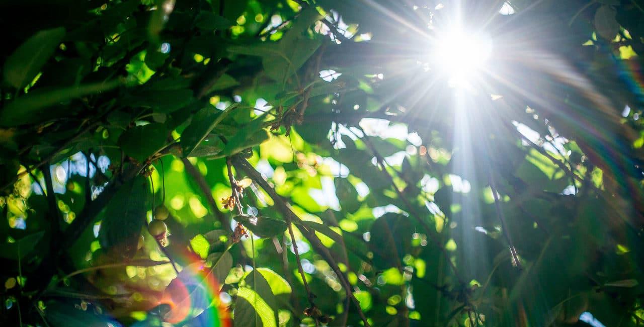 galhos de árvores ilustrando o que é permacultura