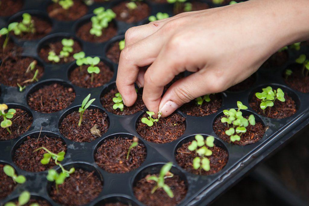mão de uma pessoa cultivando horta caseira ilustrando atitudes sustentaveis
