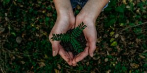 mãos segurando uma muda de árvore ilustrando atitudes sustentaveis